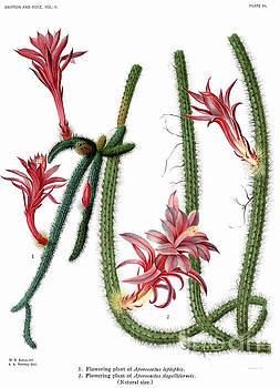 Ramneek Narang - Succulent Cactus Plant In Garden