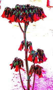 Succulent Flowers 4 by M Diane Bonaparte