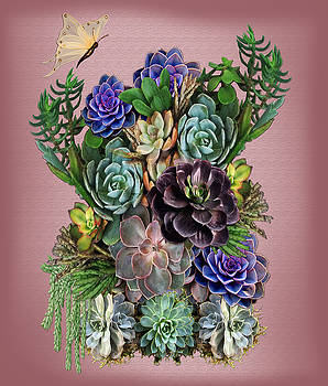 Succulent gardens by Nadine May