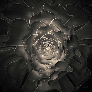 David Gordon - Succulent I Toned