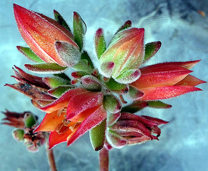 Succulent in the Morning by R and E Photography