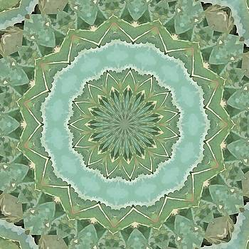 Succulent Mandala by Tracey Harrington-Simpson