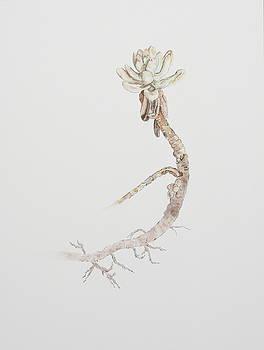 Succulent by Michelle Miron-Rebbe