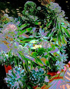 Succulent Pot by M Diane Bonaparte