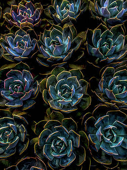 Succulent by Rod Sterling
