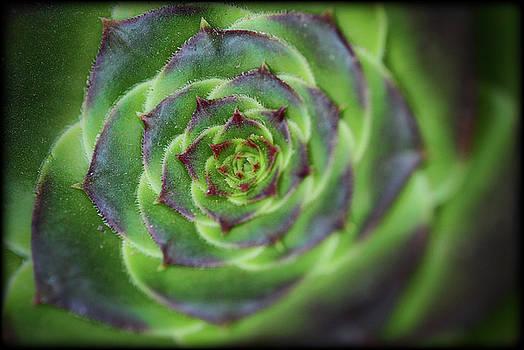 Saija Lehtonen - Succulent Spiral