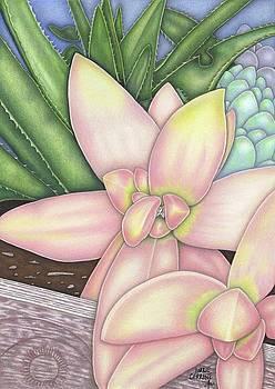 Succulent Surprise by Lorrie Cerrone