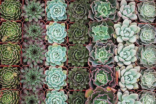 Succulent Tray by Allen Sheffield