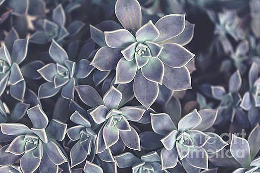 Succulents by Joan McCool