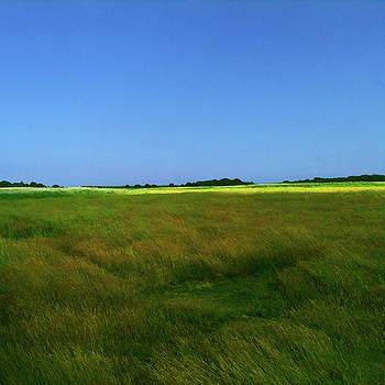 Suffolk Sunshine by Anne Kotan