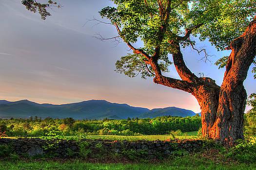 Sugar Hill NH - New England Country Scene by Joann Vitali