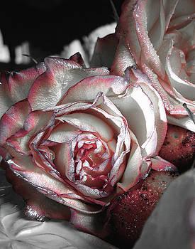 Sugar Rose by Monroe Snook
