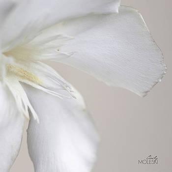 Sugary Creamy by Cindy Moleski