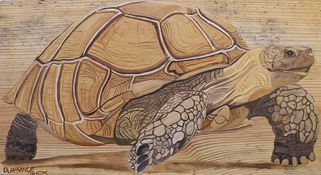 Sulcata Tortoise by Debbie LaFrance