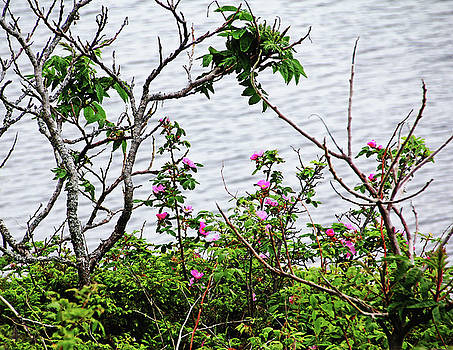 Debbie Oppermann - Sumac And Wild Roses