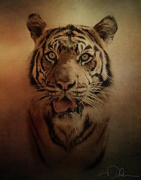Sumatran Tiger by Gloria Anderson