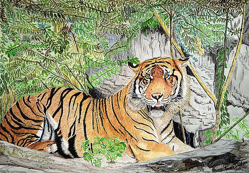 Sumatran Tiger by Yvonne Johnstone