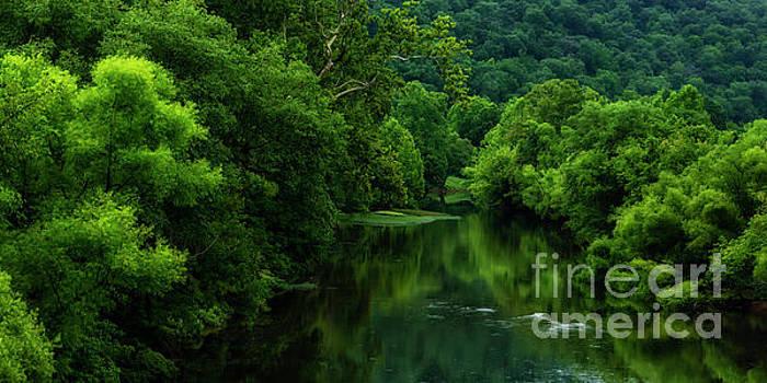 Summer along Elk River by Thomas R Fletcher