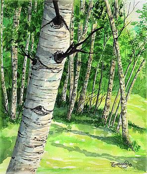 Summer Aspen by Timithy L Gordon