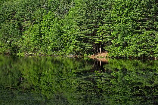 Karol Livote - Summer At Fountain Lake