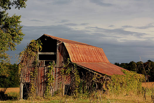 Summer Barn by Diane Merkle