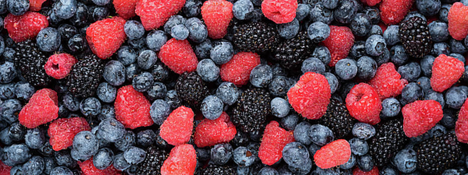 Summer Berries Panorama by Steve Gadomski