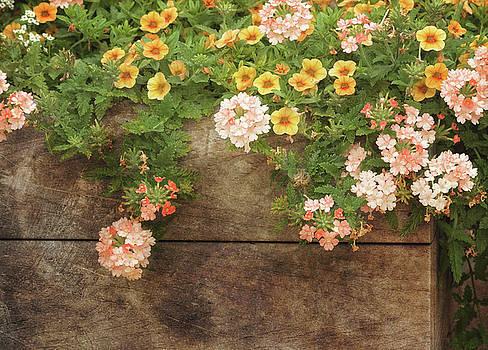 Kim Hojnacki - Summer Blossoms