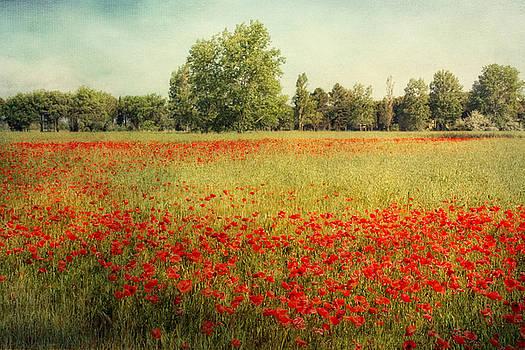 Summer Breeze by Claudia Moeckel