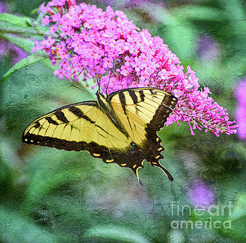 Summer Breeze - Eastern Tiger Swallowtail Butterfly by Kerri Farley