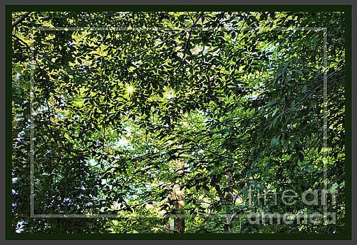 Sandra Huston - Summer Canopy, Framed