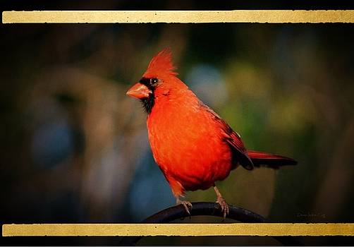 Summer Cardinal by Diane Lindon Coy