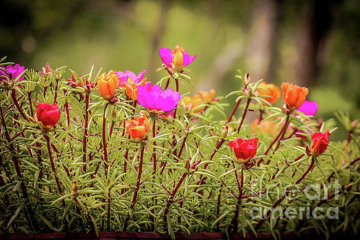 Summer colors by Claudia M Photography