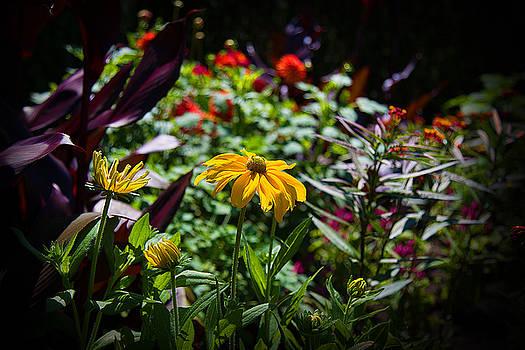 Milena Ilieva - Summer Colors