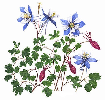 Summer Columbines by Linda Wolfe