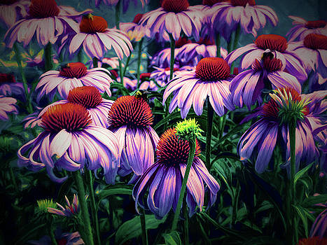 Summer Coneflowers by Diane Schuster