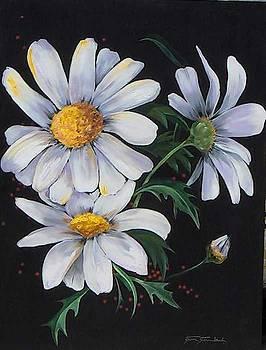 Summer Daisies by Stan  Sternbach
