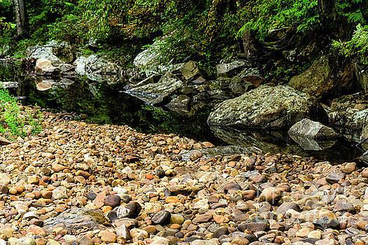 Summer Day Williams River  by Thomas R Fletcher