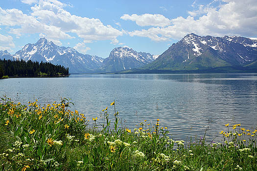 Summer Day with Flowers in Grand Teton National Park by Bruce Gourley