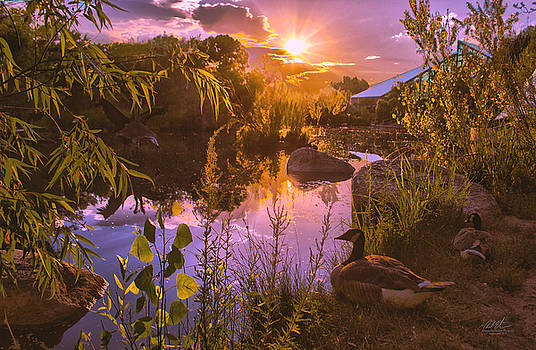 Summer Evening at the Botanical Garden by Richard Estrada