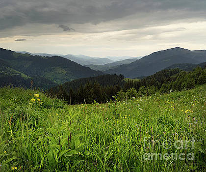 Summer Evening At The Mountains Meadow by Michael Lesiv