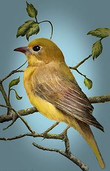 Summer Female Tanager by Ralph Duncan