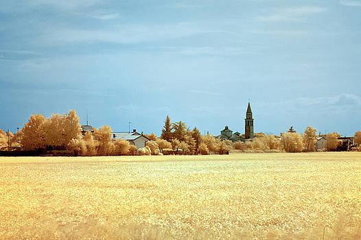 Summer field by Helga Novelli