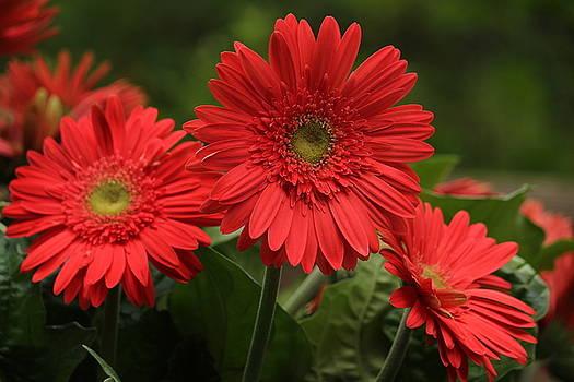 Rosanne Jordan - Summer Flower Heat