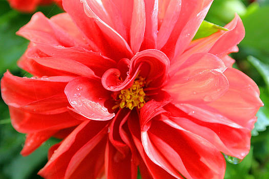 Summer Flower by Julie Behm