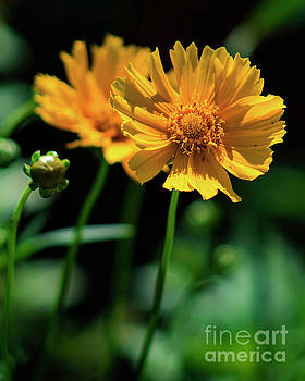 Summer Flowers 2 by Joe Geraci