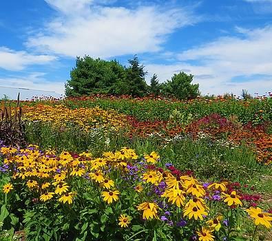 Summer Flowers in PA by Jeanette Oberholtzer