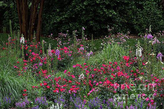 Summer Garden Paradise by Doug Sturgess
