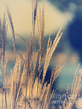 Summer Grasses IV by Chris Armytage