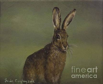 Summer Hare by Sean Conlon