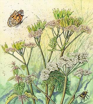Summer Hedgerow by Lynne Henderson